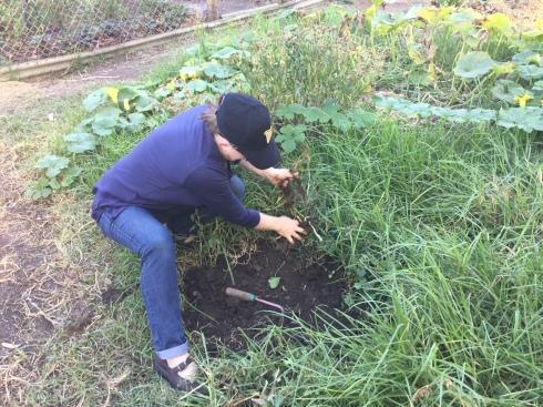KC begins weeding...